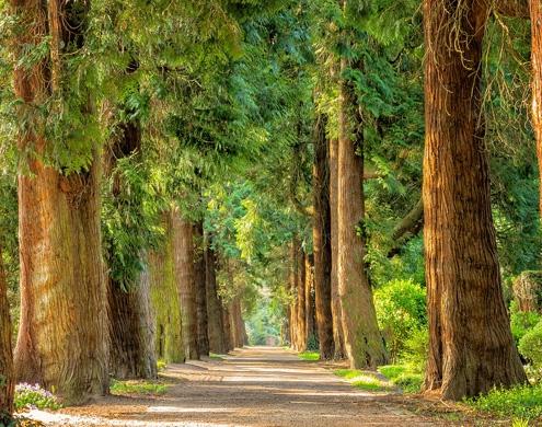 Fysio Ilja blog mindfulness